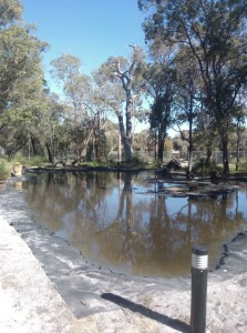 Whitemen Park Pond WA